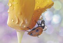 Bugs Life / Just bugs / by Jennifer Bongar
