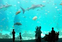 Aquarium Projects
