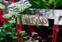 Outdoor Home/Garden