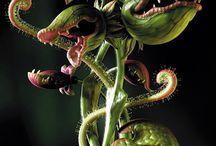 evil plants
