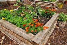 ogród - inspiracja