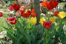 ✿God's Gardens❀ / Beauty of Gardens and Flowers that inspire me / by Karen McClane