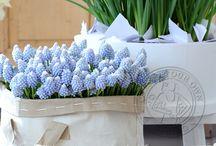 ☼ Tips seizoensbloemen / Tips over bloemen
