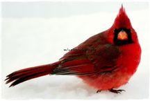 Bird Watcher / by Susan Benz Moore