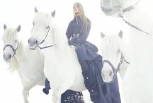 Beautiful (fashion) horse pics
