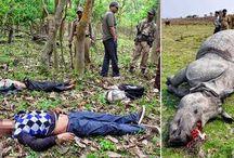 Poachers will be SHOT