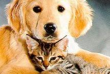 Dogs I love / by trish bobrowski
