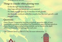 StraTREEgic Planting / Where to plant trees and how to strategically plant them to save energy.