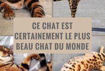 Photos d'Animaux Mignons / Des photos d'animaux mignons garanties de vous réchauffer le cœur !