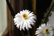 Virágok papírból