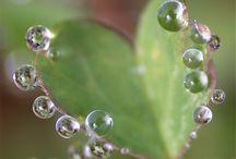 Dew Drop Inn / by Mary Mitchell