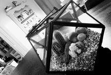 Cacti Terrariums