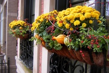 Fall Container Gardening Ideas / Great ideas for fall container gardens.