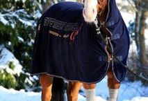 Sox For Horses / Bringing leg protection against the dirt and disease carrying insects in the equine environment.