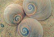 Photographs - Sea Shells