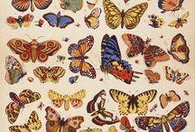 motyle, na tatuaż