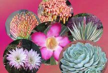 Gardening - Succulents