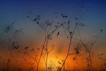 ~Sunrise~Sunset~