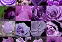 Purple! / by Roberta Perez