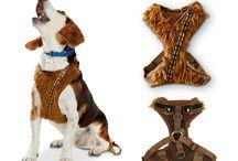 Zabawki dla kota i psa
