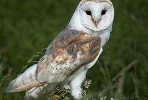 Owls - bird photography / Bird Photography | Owl Photography | Photos of Owls | Nature Photography | Wildlife Photography