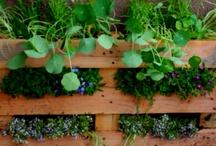 garden / by Heather Joseph De Terra