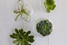 Green Thumb / Letting it grow... / by Tessa Clemens