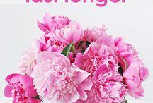 Tips for Fresh Flowers