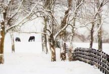 """Winter Wonderland / """"There is a privacy about it which no other season gives you .....  In spring, summer and fall people sort of have an open season on each other; only in the winter, in the country, can you have longer, quiet stretches when you can savor belonging to yourself.""""  ~Ruth Stout"""