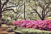 Sweet Tea and Sunshine / life in Savannah, Georgia / by Chelsea Merchan