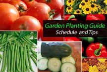 Fruit and Vegetable Garden Stuff