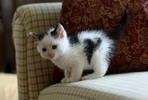 Cats - I Love Cats / by Emily Depue Bennett