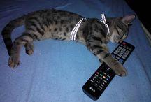Rudi / A cicámról :)