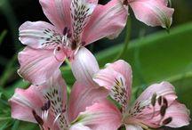 INSPIRATION-FLOWERS
