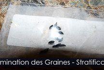 Germination des Graines - La Scarification Simple / Guide de jardinage sur l'aide à la germination des graines ayant besoin d'une période de froid pour germer. Instructions et illustrations pour effectuer le traitement à froid des semences.