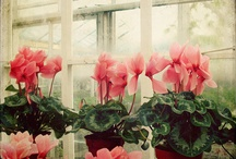 Plants and Flowers  / Pretty plants that i would enjoy in my home and garden, and beautiful flowers that i love.