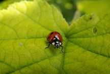 Plants to attract beneficial insects