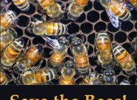 Save The Bees! / Information about saving the world's bee population