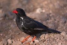 Wild Life Lists / Big 5 Little 5 Secret 7 magnificent 7 Big 6 Birds Big 5 Raptors Ugly 5