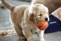 cute! / by Lisa Bellar