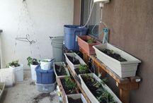 garden 2105