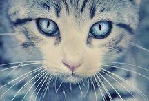 Chaton Musk / Знаете, как пахнет шерстка кошки? Мягкий, сухой, чуть пудровый аромат шерстки смешивается с анималистическими нотками. Роза и бобы тонка придают композиции теплоты и нежности, ваниль – сладости, а дягиль с привкусом миндаля – резкости.  Горечь и острота уходят, уступая место невесомому облачку, как пара снежинок, случайно упавших на ту самую шерстку. https://www.livemaster.ru/sweetsoul Цветочно-пудровый, деликатный, обволакивающий, почти гурманский аромат.