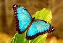 Birds Butterflies & Bugs