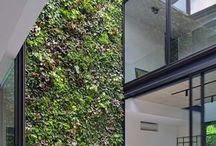 Jardín Vertical y Muro