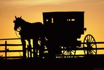 Amish Life / by Sandy Allen