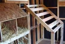 Chickens coop interior