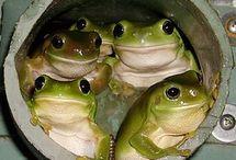 カエル 画像