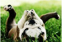 Cute Dogs / Adorable dogs that will make you smile!