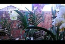 orquidário