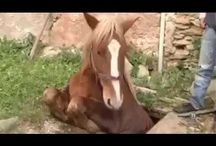 Save Animals... a Horse...!!!